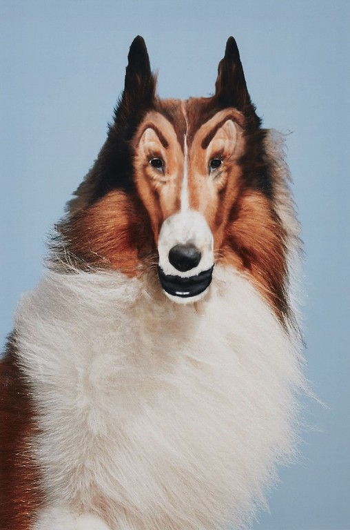 "John Waters: ""Reconstructed Lassie"", 2012, C-Print, Privatsammlung, © John Waters"